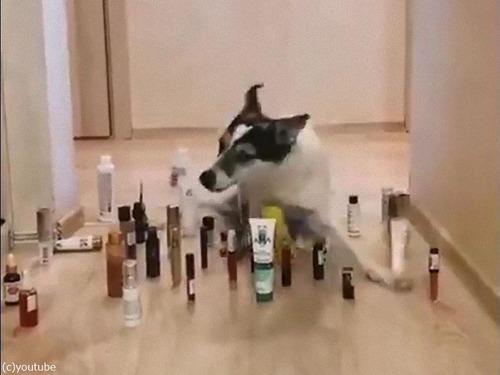 猫と犬の障害物回避04