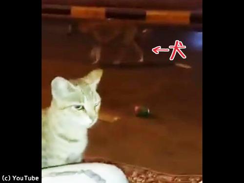 人間になりきる猫00