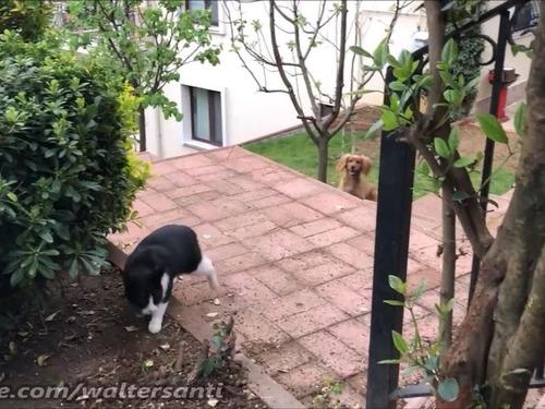 庭に入れさせない猫vs入りたい犬05