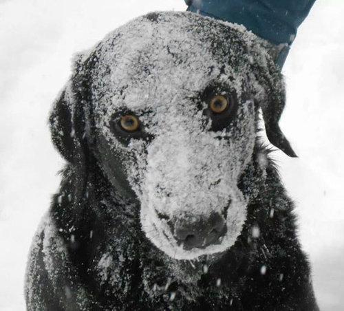 雪で遊んだ後の虎03