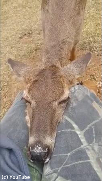 鹿がお昼寝場所に選んだのは…01