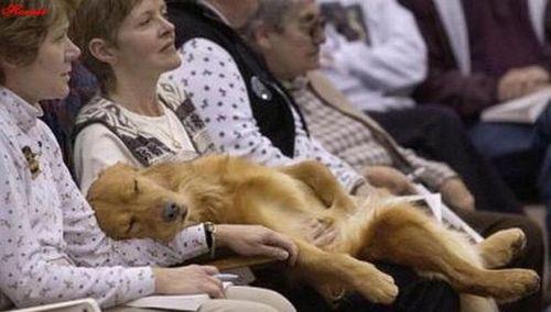 犬と仲良し20