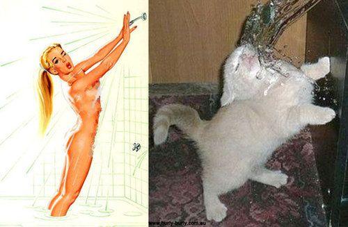 猫のポーズ15