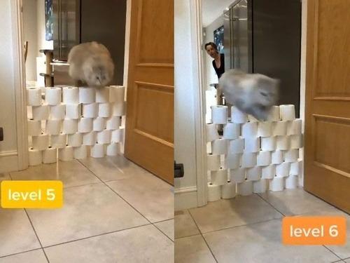 猫はトイレットペーパーを何段まで飛び越えられるのか02