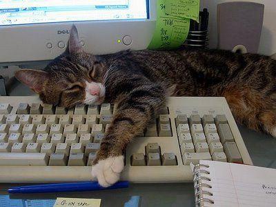 パソコンの上の猫07