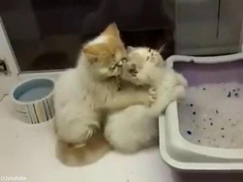 猫が猫の肩もみ05