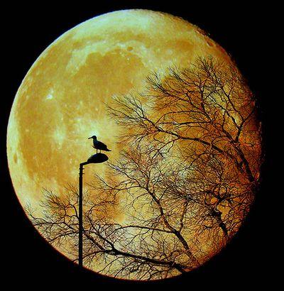 月の魔力17