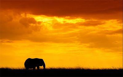 美しいアフリカ05