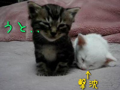 眠りに落ちる子猫