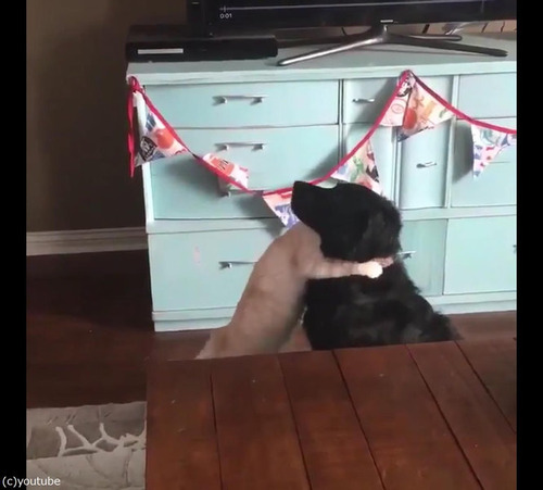 猫が犬に大胆な愛の告白05
