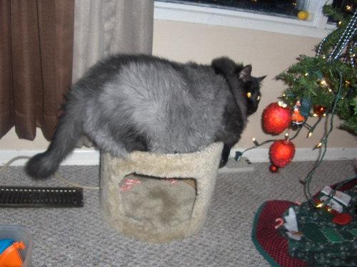 箱入り猫13