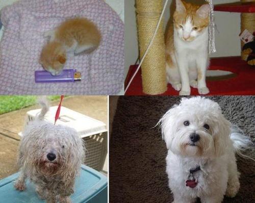 救助された犬や猫00