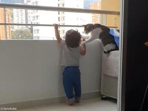 幼児を守る猫01