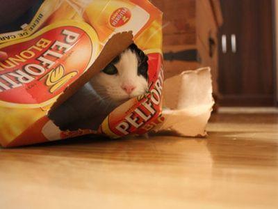 潜む猫00