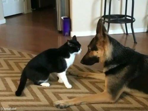 猫と犬がケンカしてると思ったら…結末にほっこり04