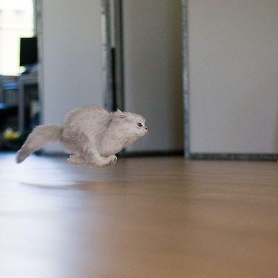 走る猫01