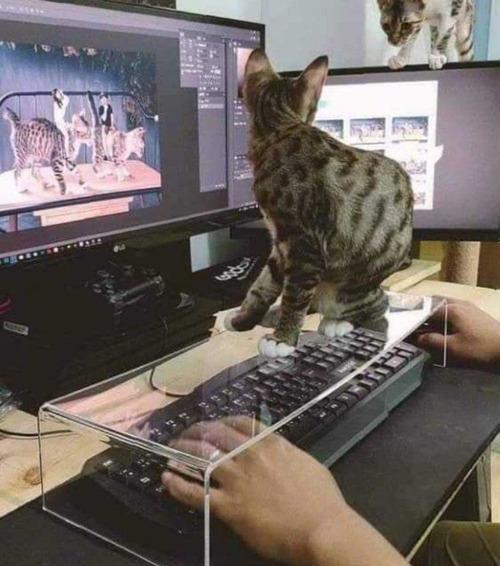 猫からキーボードを守る01
