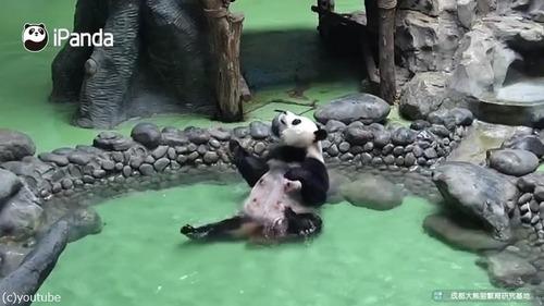 パンダの入浴風景が完全に人間03
