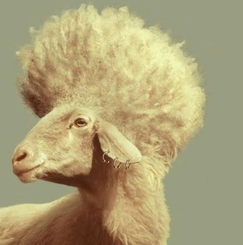 羊飼いの楽しみ12