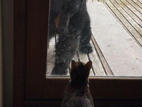 クマを追い払う猫02