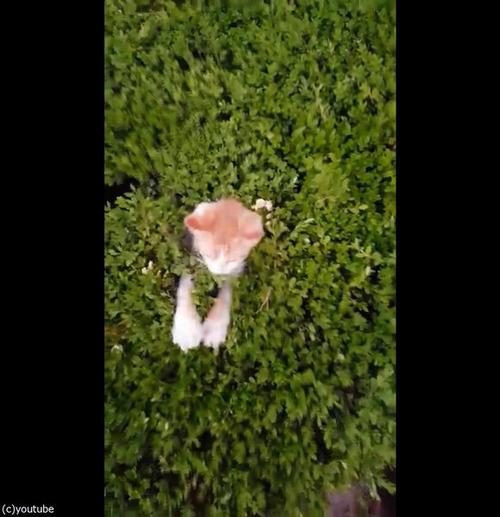 茂みから子猫02
