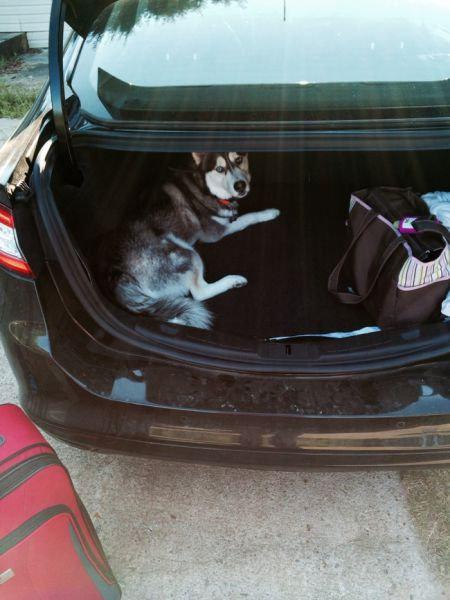 飼い主が旅行に行くことに気付いたペットたち19