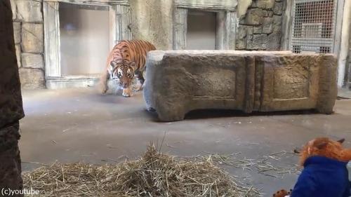 ぬいぐるみと虎01
