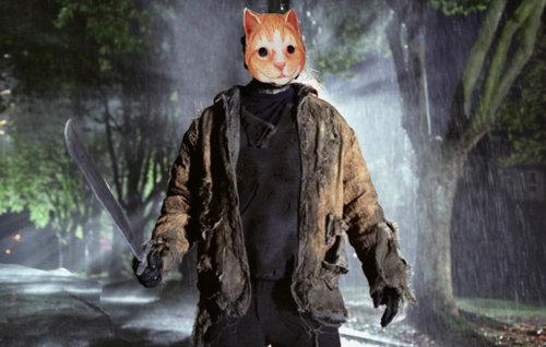 犬に猫マスク24