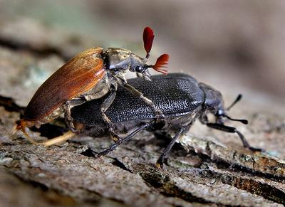 虫の交尾03