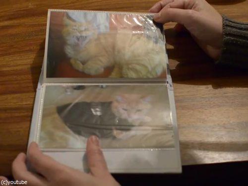 動物保護施設で行方不明の猫と再会した少年03