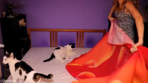猫が2匹いるとこんなにベッドメイキングが大変01