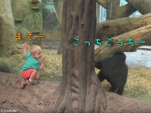 ガラス越しに人間の子供とゴリラの子供が遊ぶ00