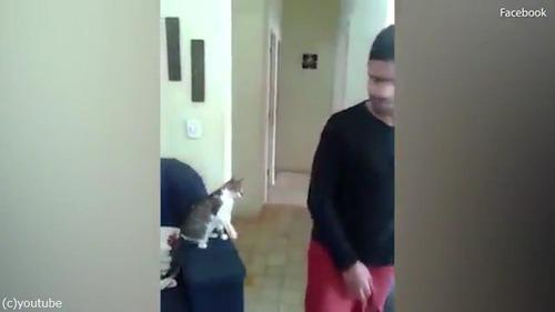 ハイタッチ猫05