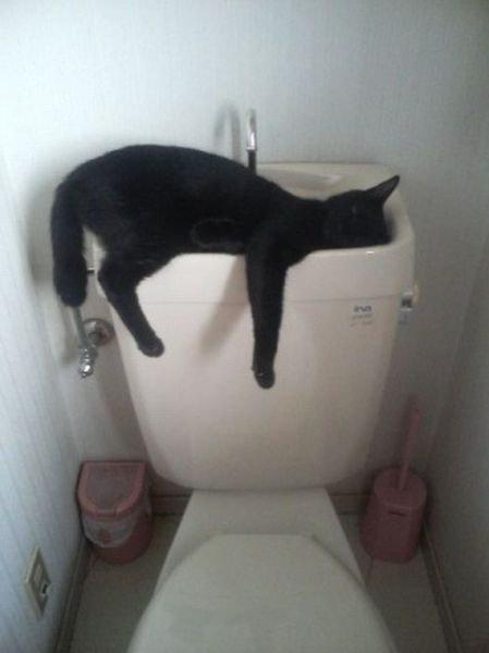 どこでも眠る猫01