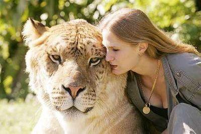 虎とライオンの交配種・ライガー06