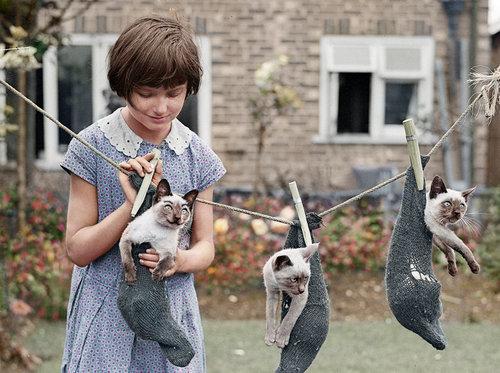 1931年の写真をカラー化「少女と猫」03
