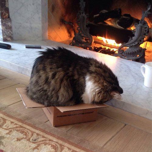 箱入り猫10