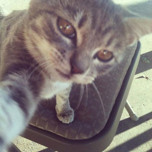 猫の自撮り02