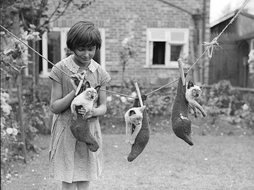 1931年の写真をカラー化「少女と猫」02