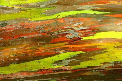カラフルな木02
