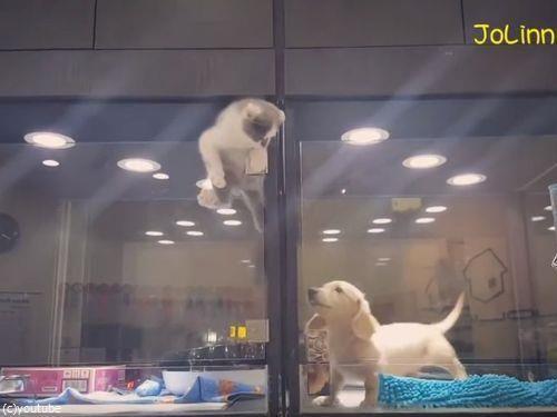 隣の犬に会いに行く猫02