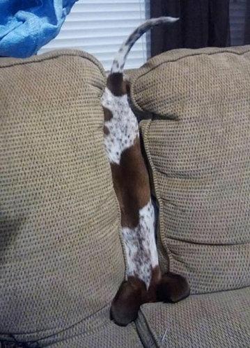犬や猫の家具の使い方08
