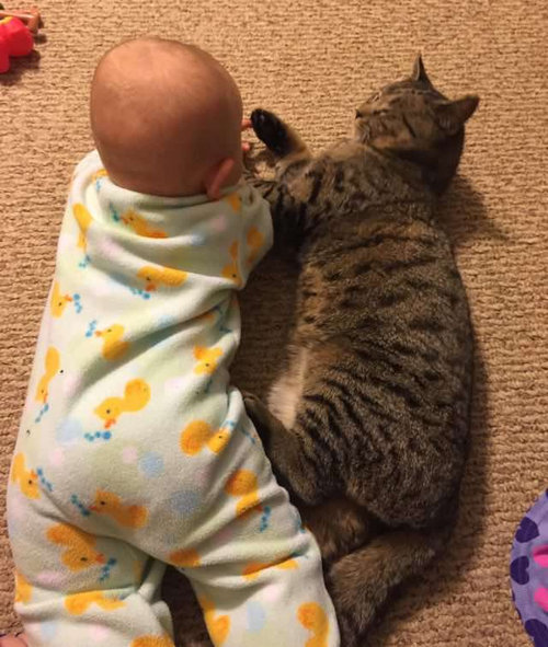 妊娠中に拾った猫が、今は赤ちゃんと親友に10
