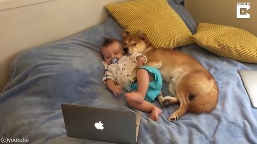 赤ちゃんと一緒にのんびりする柴犬が可愛過ぎ03