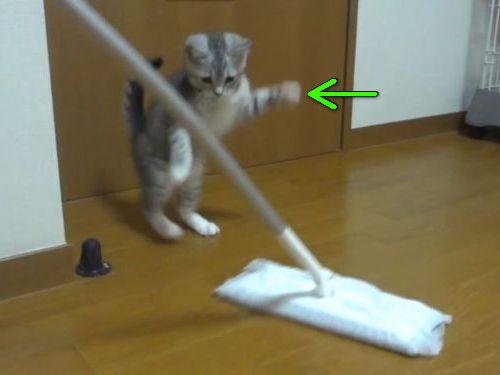 子猫がいると掃除がはかどらない00