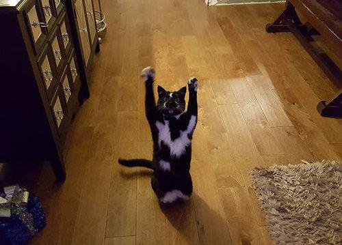 ばんざい猫07