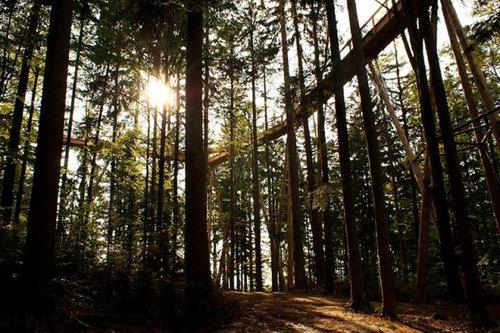 「Tree Top Walk」09