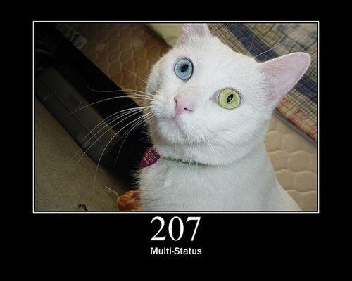 猫でHTTPステータスコード04