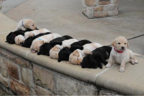 03並んだり列になったりしている動物たち