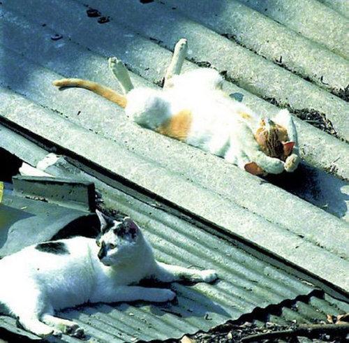 猫の寝方04